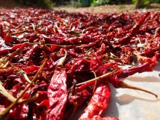 Chillis drying in the sun. A pretty common and somewhat glorious sight in India.