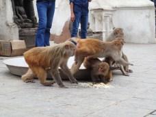 Monkeys. Because it's a monkey temple.