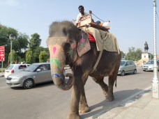 Bloke on an elephant casually strolling down the road.