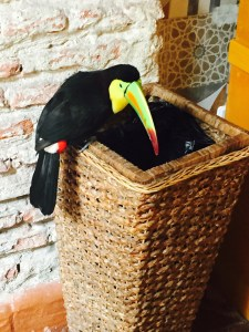Tado the Toucan
