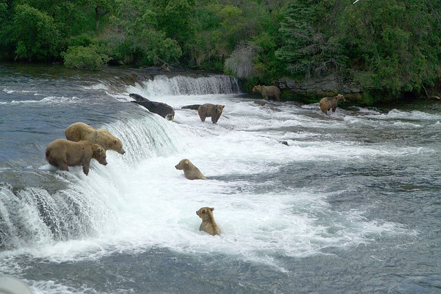 brown-bears-2119560_640