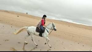 Morocco Essaouira horse