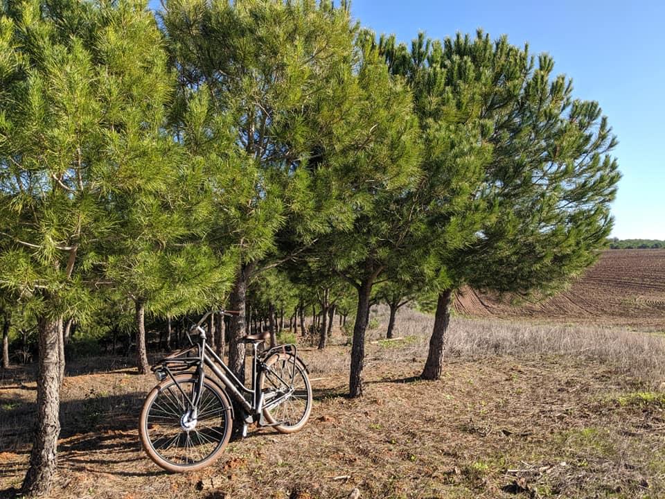 Alentejo biking