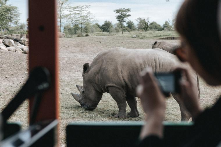 choose-african-safari-rhino