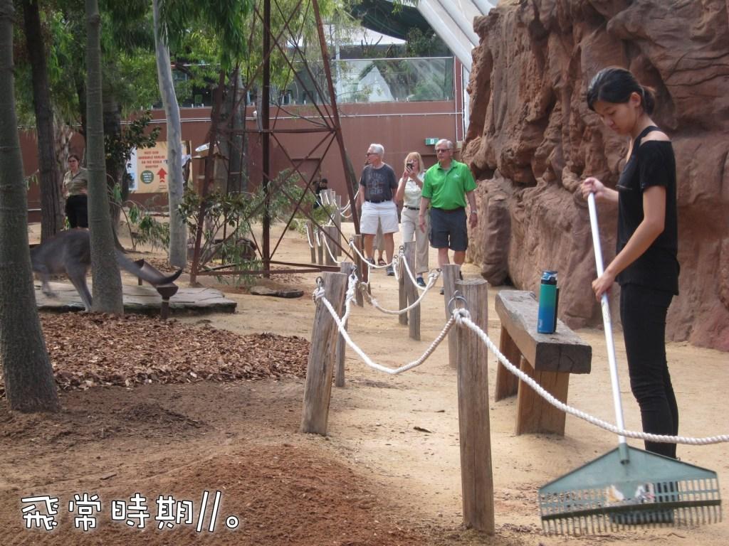 設計成一條遊客步道的袋鼠區,讓遊客與袋鼠的距離更近。