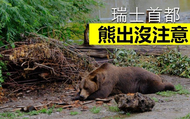免費睇!瑞士首都伯恩(Bern)Bear Park 熊出沒注意