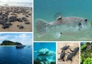 6 Exclusive Marine National Parks in India