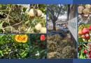 7 Exquisite Fruits Varieties in Kerala