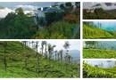 6 Incredible Tea Plantations in India