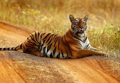 6 Prominent Tiger Reserves in India