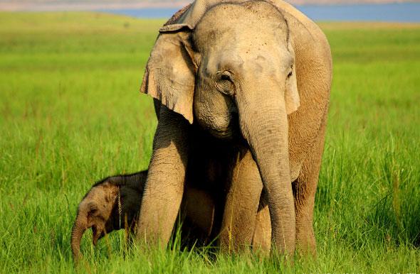 Elephants at Jim Corbett Tiger Reserve