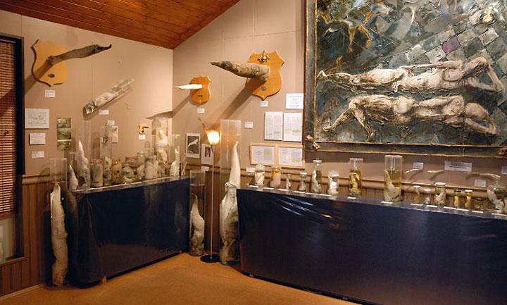 phallologicalmuseum1