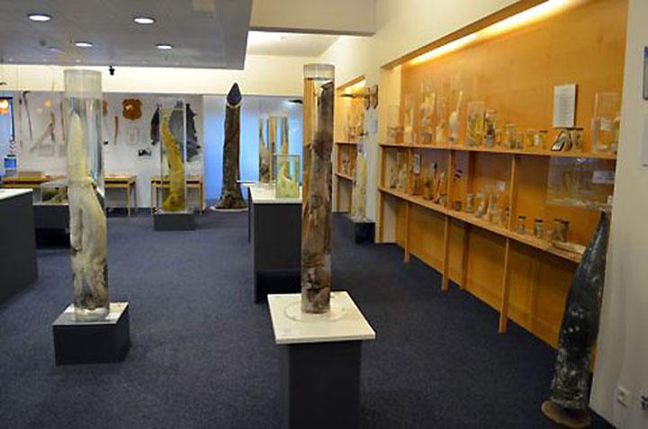 phallologicalmuseum2