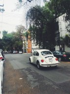 beetles if mexico city