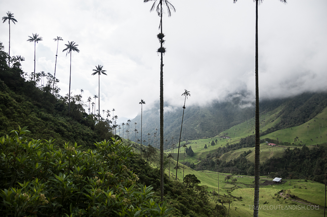 Valle de Cocora Hike - The Wax Palms