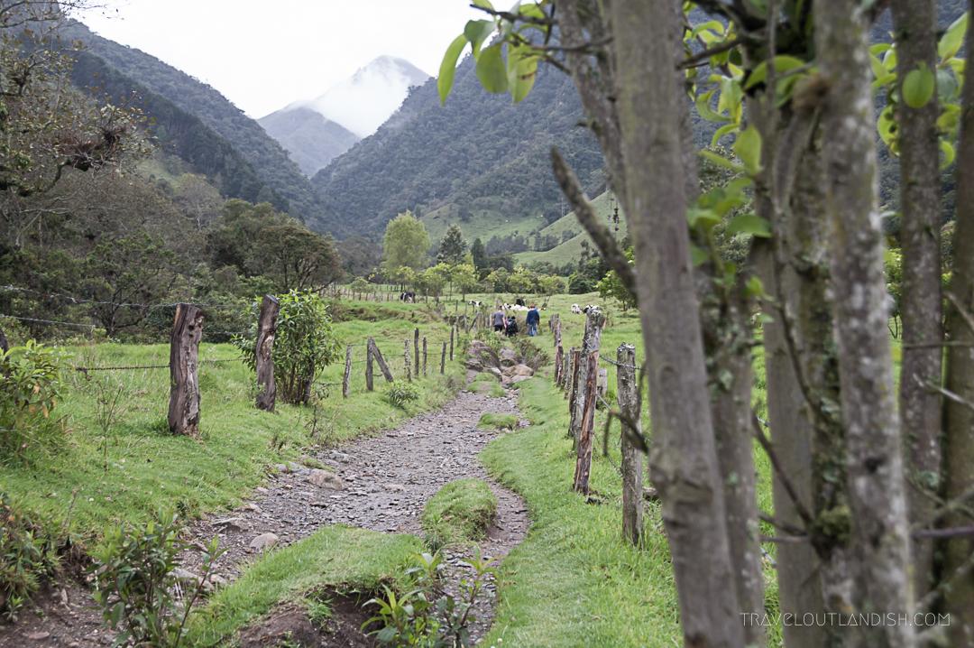 Valle de Cocora Hike - Trail