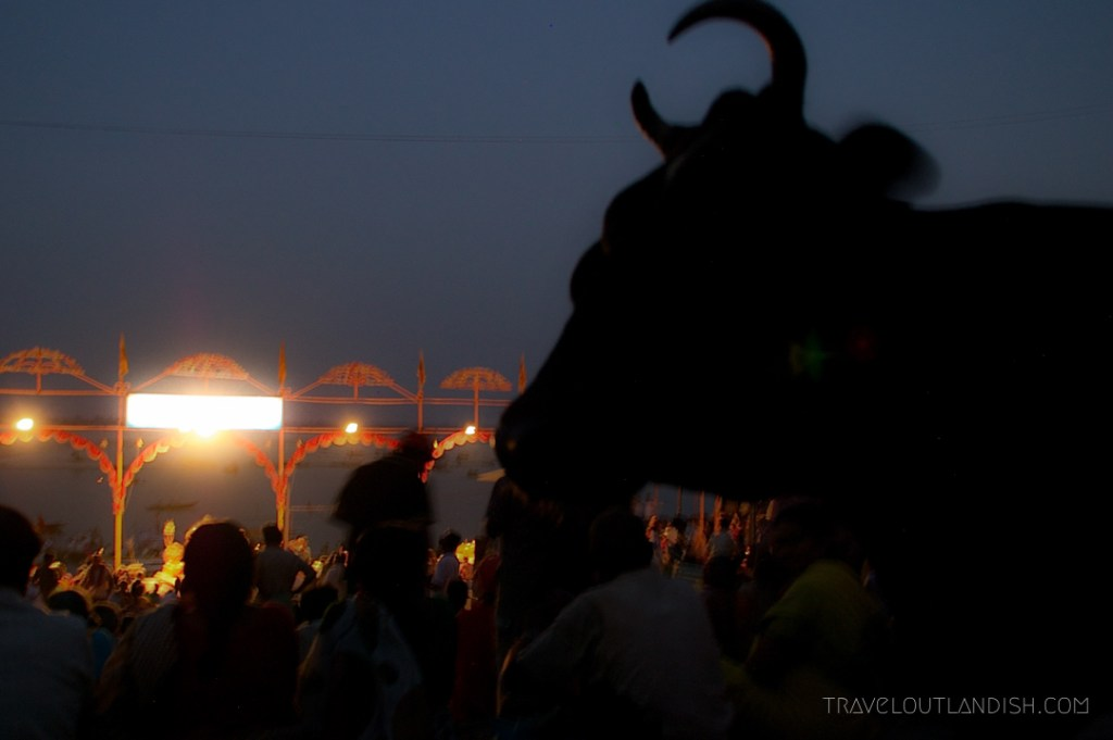 Bull at night in Varanasi