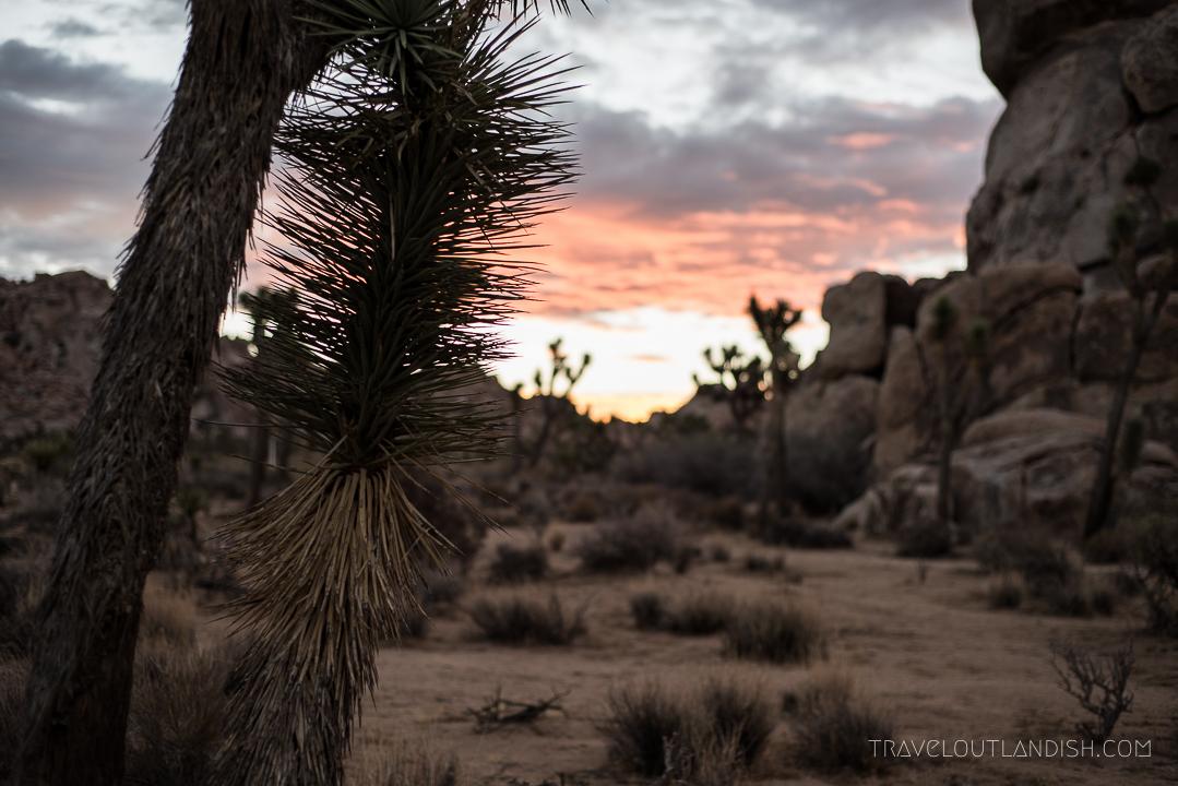 Things to do in Joshua Tree - Sunrise in Joshua Tree