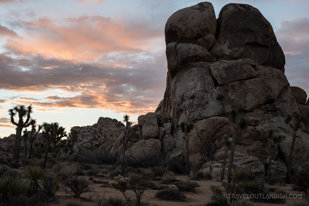 Things to do in Joshua Tree - Sunrise in Joshua Tree