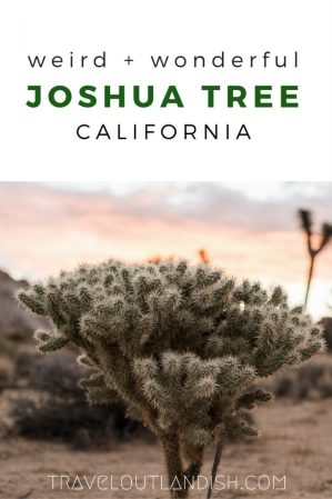 California has some of the most epic national parks in the USA, and Joshua Tree National Park is no exception. Check out 9 weird + wonderful things to do in Joshua Tree!