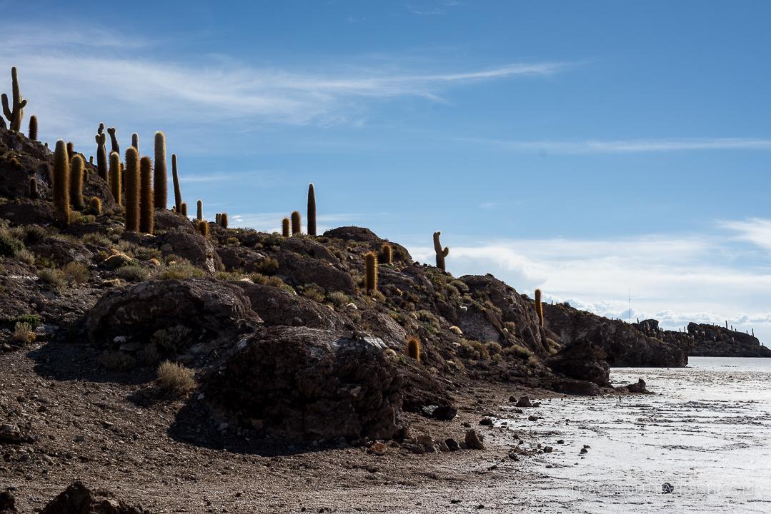 Salar de Uyuni Tour - Isla Incahuasi