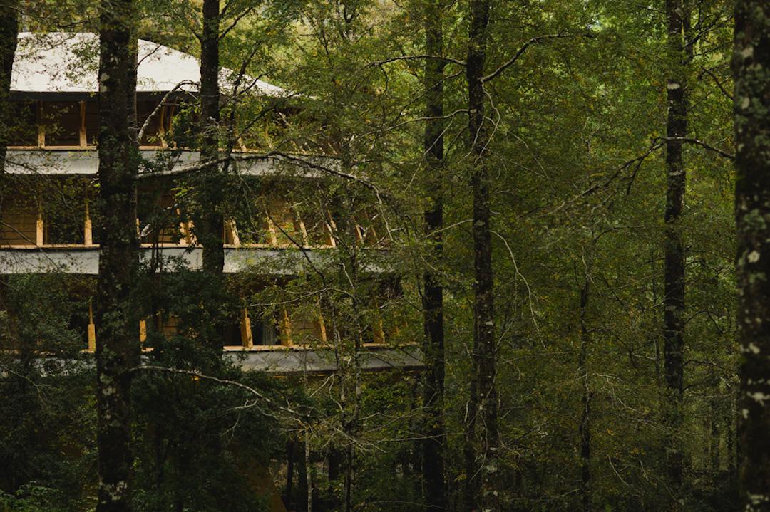Unusual Hotels in South America - Reino Fungi
