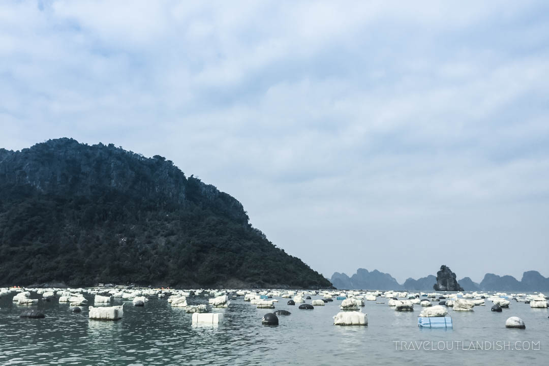 Bai Tu Long Bay Cruise - Oyster Farm