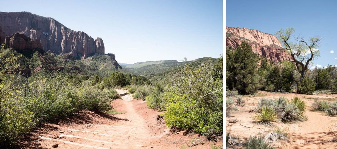 Hiking in the Kolob Canyon on Day 1 of the Zion Traverse