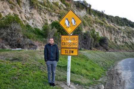 Pingwony Nowa Zelandia