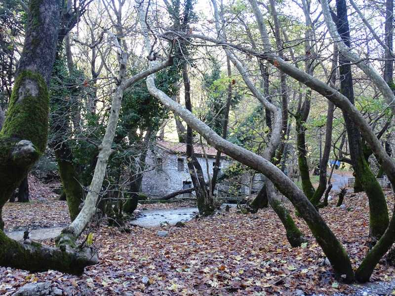 Planitero near Kalavrita