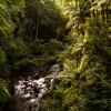 Onomea gulch near Hilo