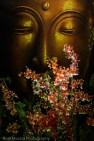 Buddha and Oncidiums