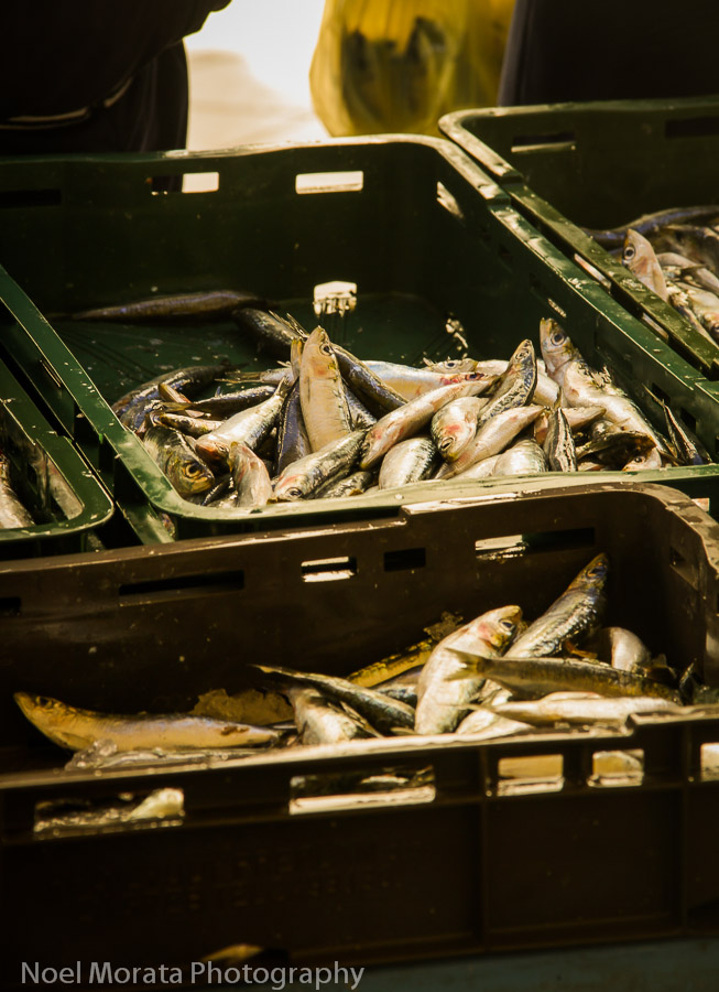 Split, Croatia fish market - local fish on display