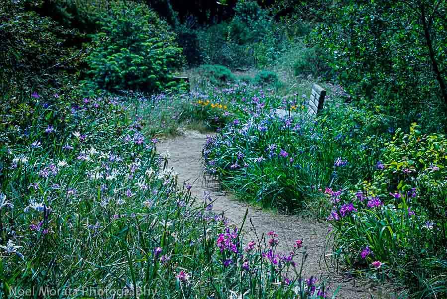 California Garden At Golden Gate Park
