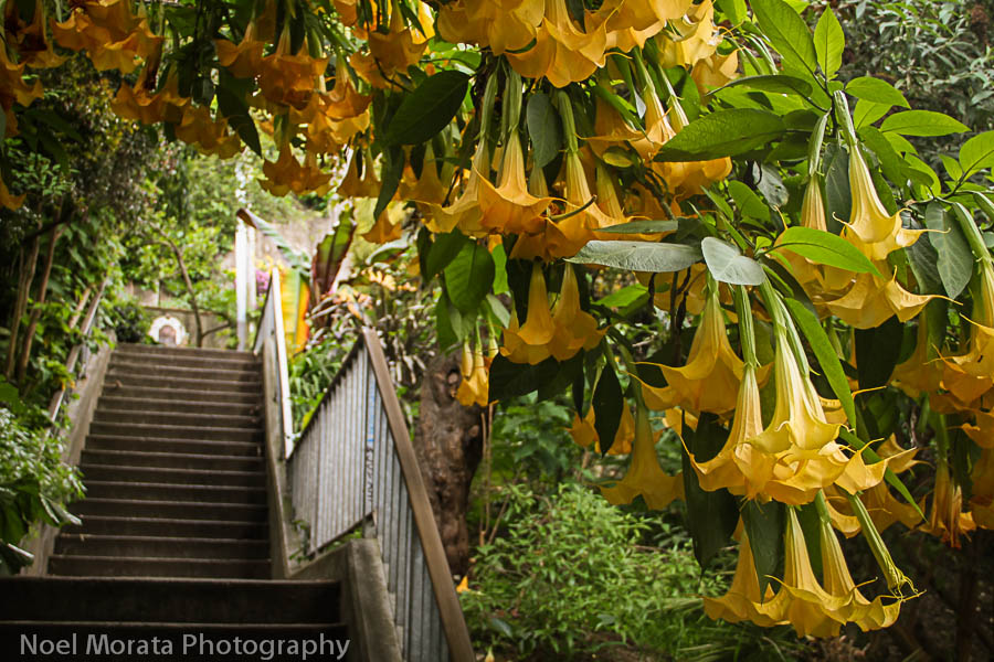 The Greenwich stairs to the community gardens