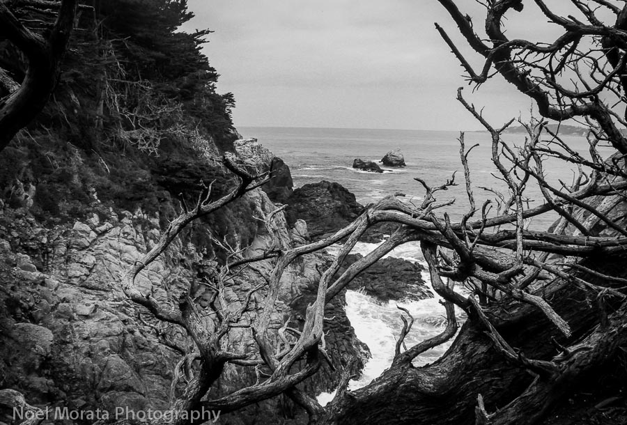 Point Lobos Reserve in black and white