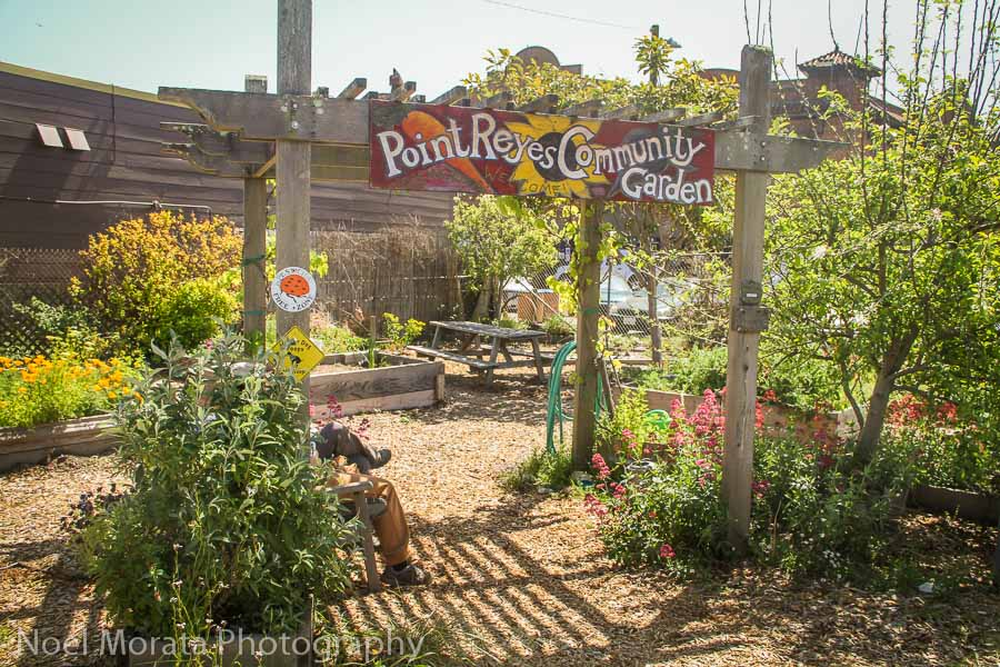 The community garden at Point Reyes Station