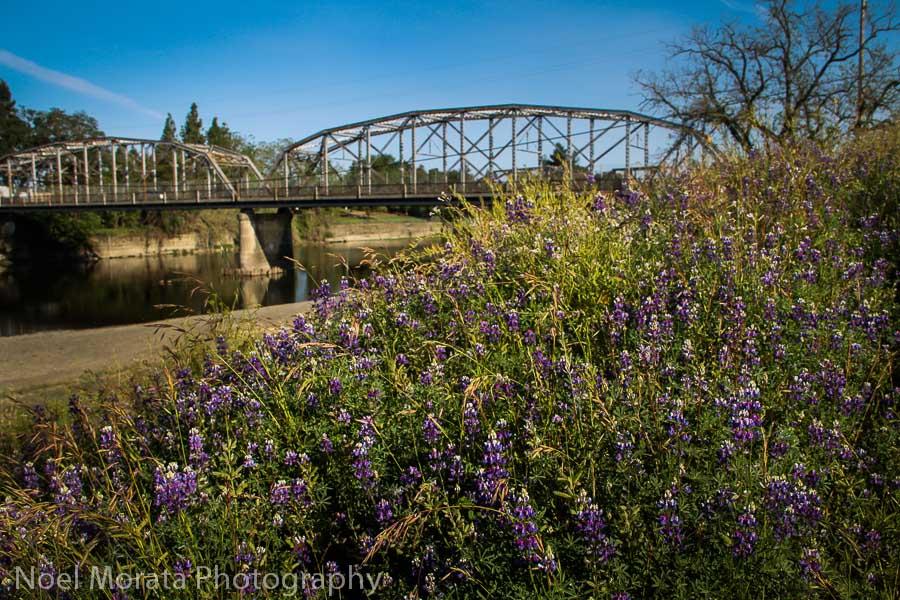 Visiting Hip Healdsburg, CA -  Travel Photo Mondays