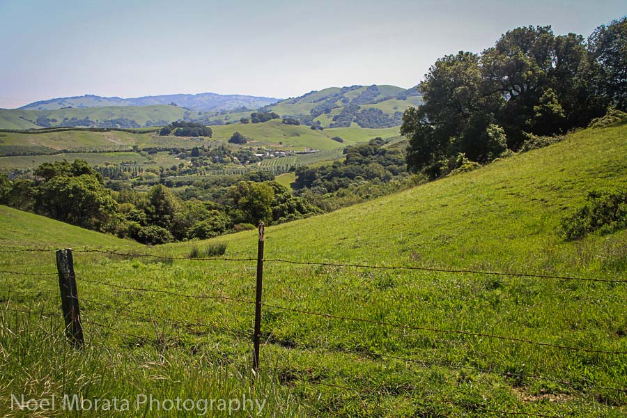 Gorgeous rolling hills in West Sonoma County