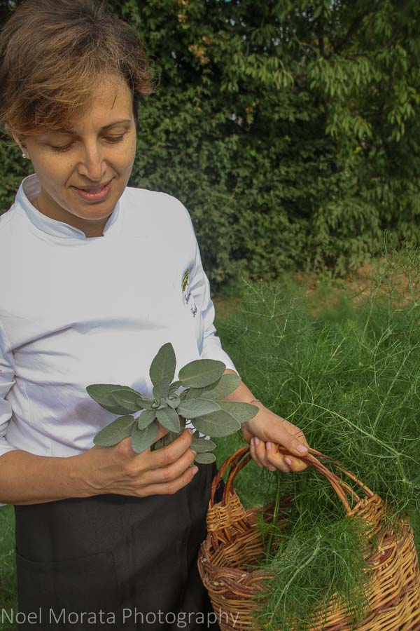 Collecting some herbs and greens for the cooking class at Variegated eggplants at Podere San Giuliano