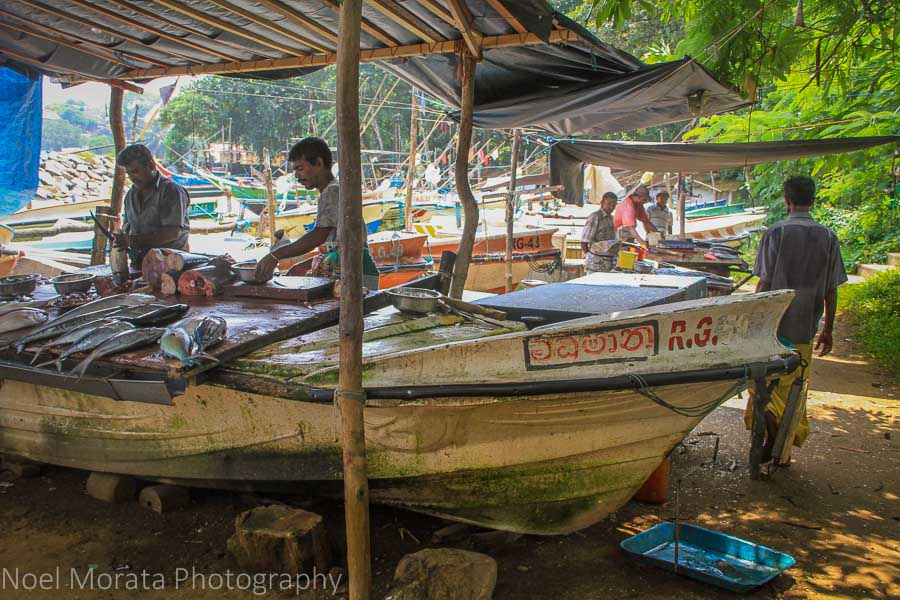 Selling fresh from the boats in Galle