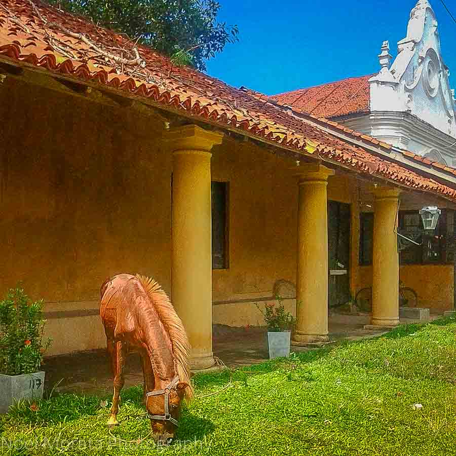 Colonial buildings and a horse at Galle Fort