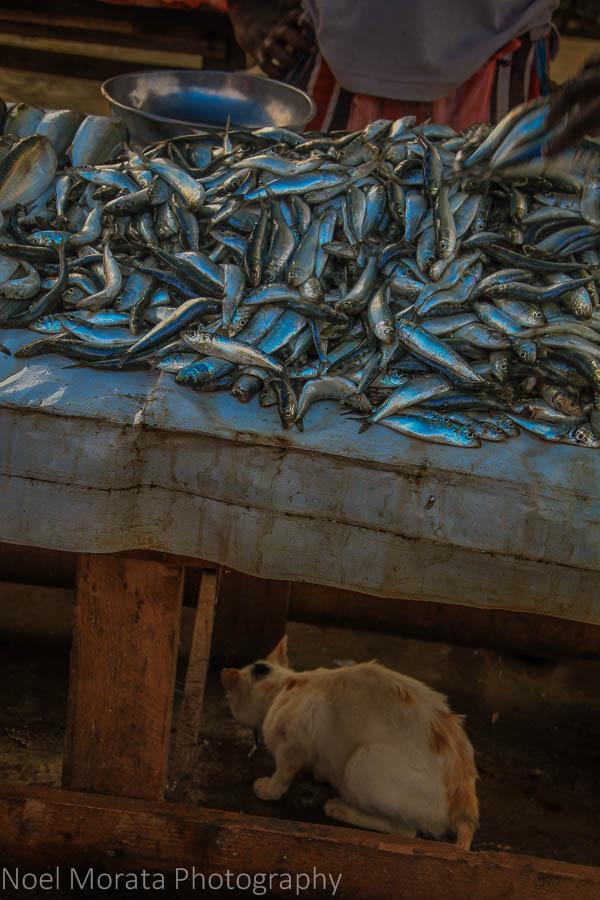 Cats and fish at the Negombo fish market