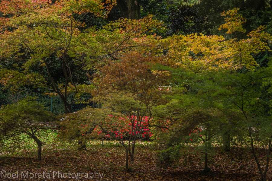 Autumn colors at the botanical gardens at Parco Giardino Sigurtà