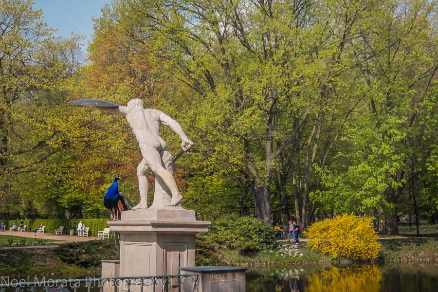 Touring Warsaw: Statues and peacocks at Łazienki Park