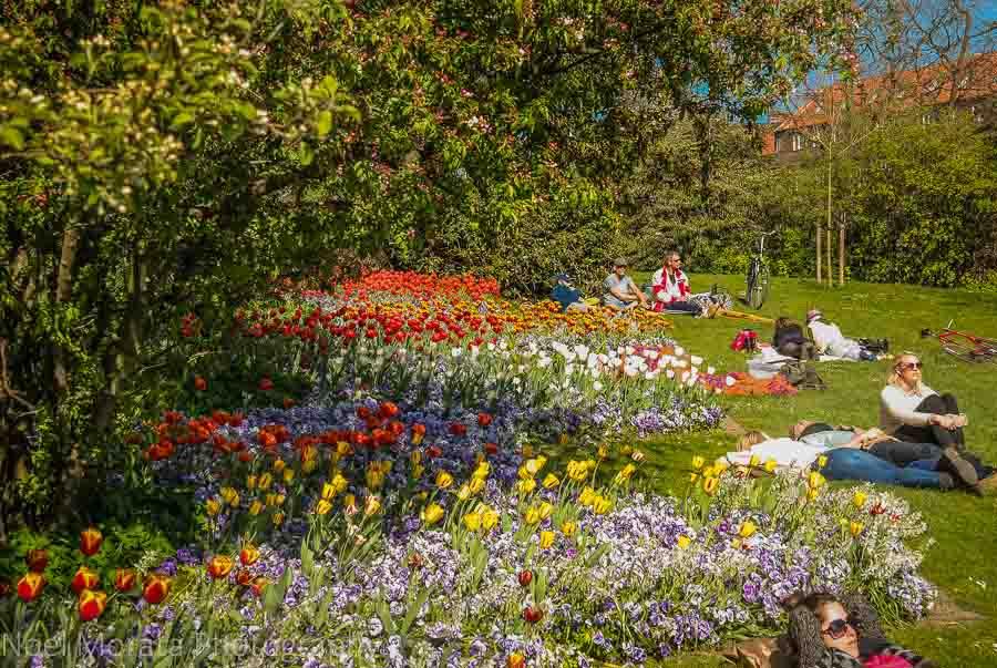 Enjoying the outdoors and flower gardens in Copenhagen