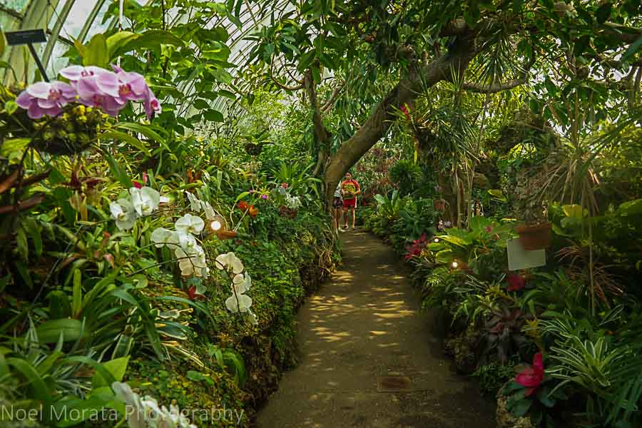 Exotic tropical garden - Phipps conservatory, Pittsburgh