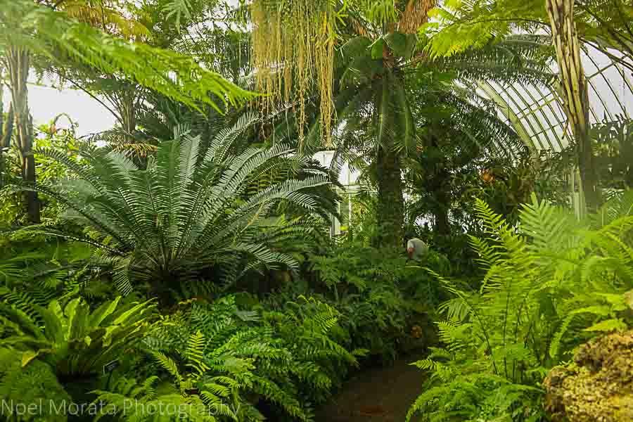 Fern garden - Phipps conservatory tour
