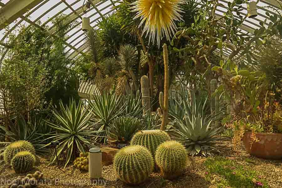 Desert environment - Phipps conservatory tour
