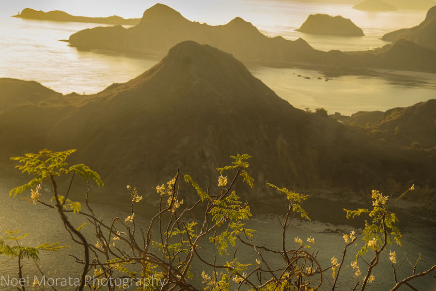 Nature inspired at Padar island - Visiting Komodo National Park
